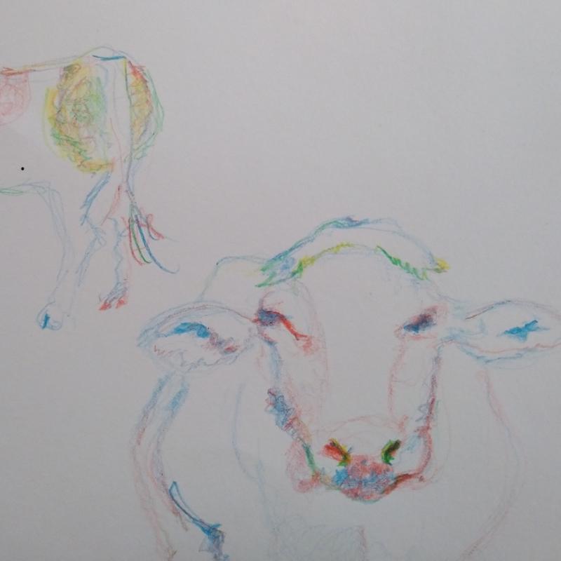 animauxetrepresentation (4)