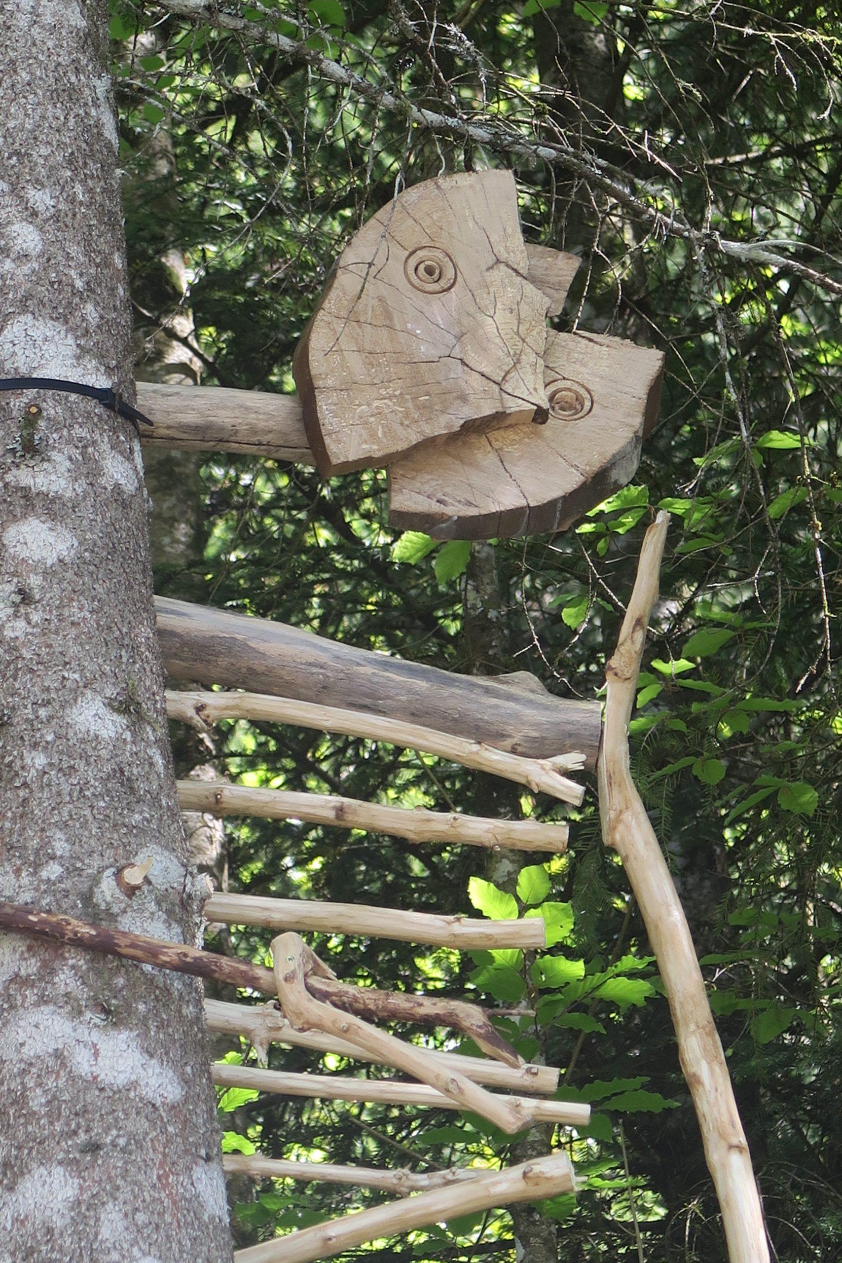 3c esprit de la forêt